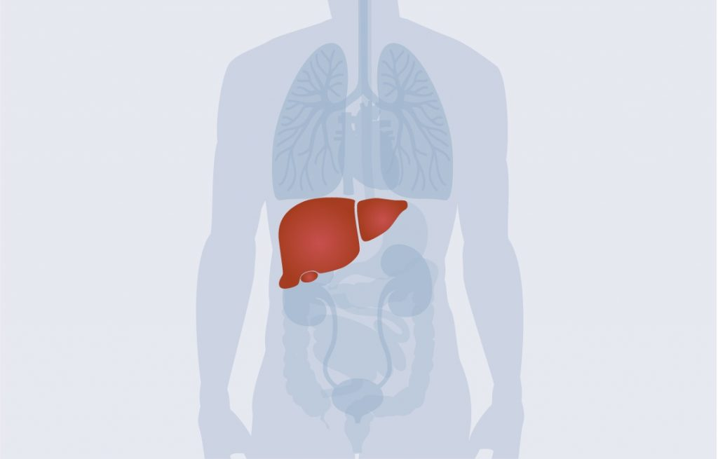 illustration-of-liver-in-human-body